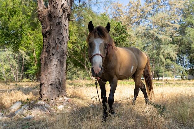 Cheval brun stable sur herbe sèche Photo Premium