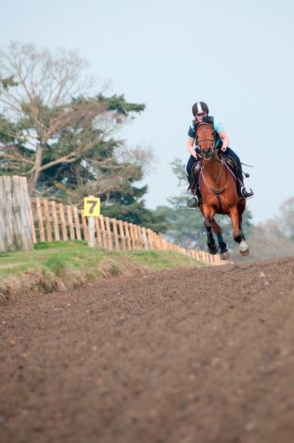 Cheval Et Cavalier Dans Un Champ Photo Premium
