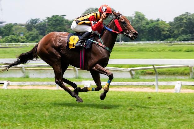 Cheval de course et jockey sautant par-dessus un obstacle Photo Premium