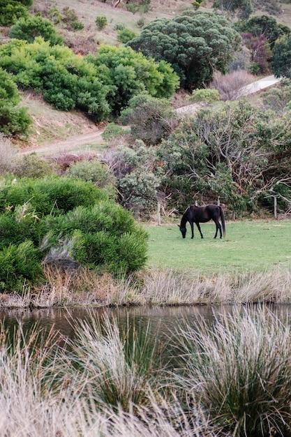 Cheval en forêt Photo gratuit