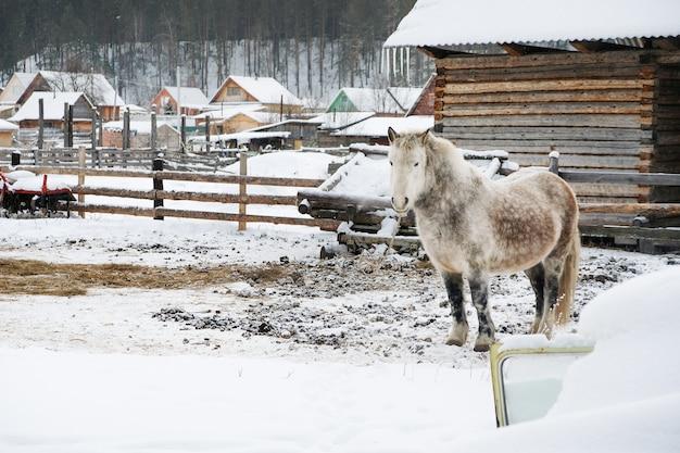 Cheval gris dans l'écurie Photo Premium