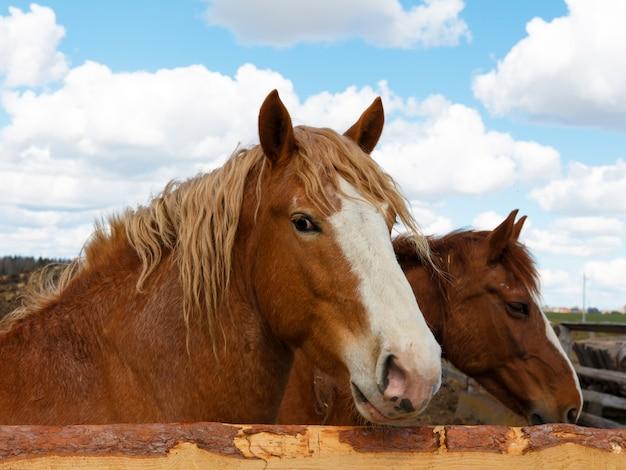 Cheval sur la nature. portrait d'un cheval, cheval brun Photo Premium