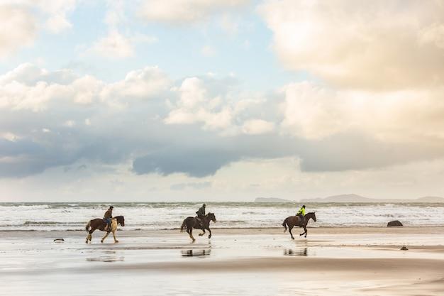 Chevaux au galop sur la plage au coucher du soleil Photo Premium