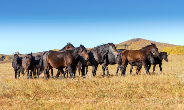 Chevaux dans la prairie Photo Premium