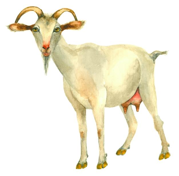 Chèvre Dessiné à La Main Photo Premium
