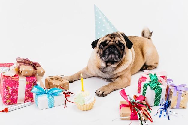 Chien d'anniversaire avec des cadeaux Photo gratuit