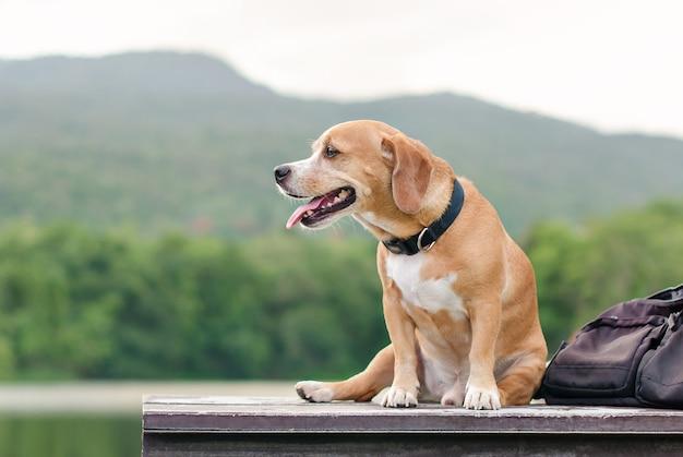 Chien assis sur du bois en plein air Photo Premium