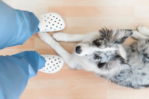 Chien assis sous les pieds de la femme vétérinaire sur du parquet Photo gratuit