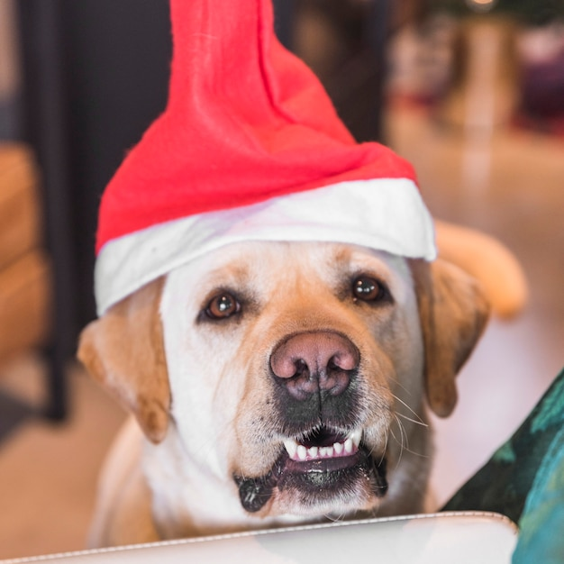 Chien au bonnet de noel Photo gratuit