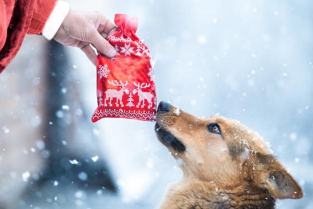 Chien De Berger Allemand Mignon Au Chapeau Rouge Prendre Sac De Faveur Rouge De Noël Présente F Photo Premium