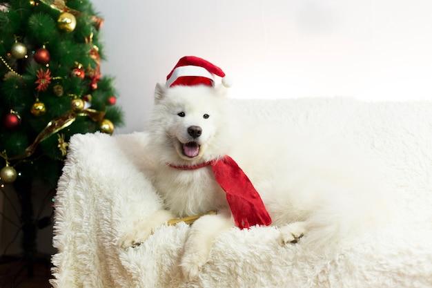 Chien Blanc Dans Une écharpe Rouge Et Un Bonnet. Photo Premium