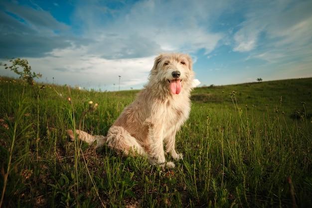 Chien blanc heureux dans la nature montre la langue Photo Premium