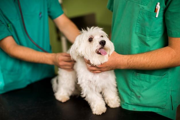 Chien blanc mignon chez le vétérinaire Photo Premium