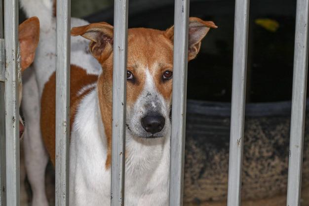 Le chien en cage à la maison Photo Premium