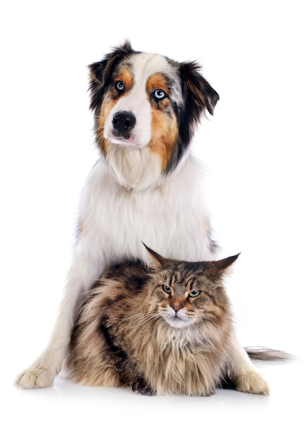 Chien et chat Photo Premium