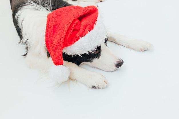 Chien Chiot Border Collie Portant Costume De Noël Chapeau De Père Noël Rouge Isolé Sur Fond Blanc Photo Premium