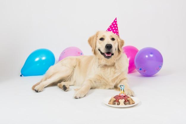 Chien Chiot Golden Retriever Souriant Heureux Avec Chapeau D'anniversaire Et Gâteau à La Viande. Photo Premium