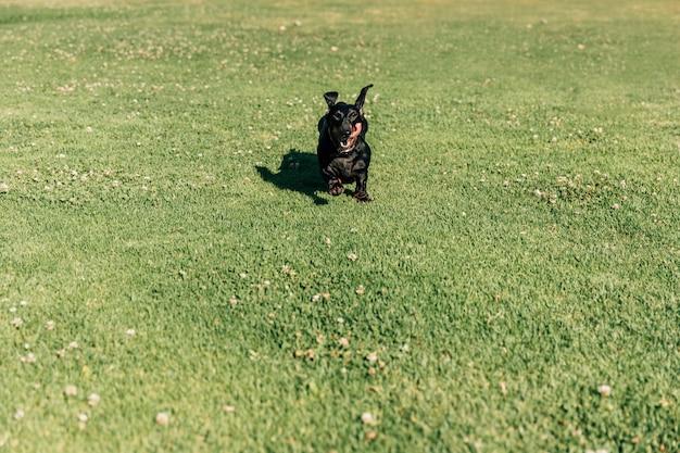Chien Courir Sur L'herbe Verte Photo gratuit