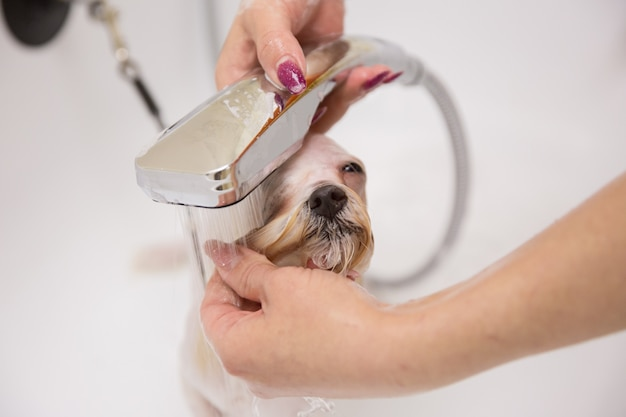 Chien dans le salon de toilettage Photo Premium