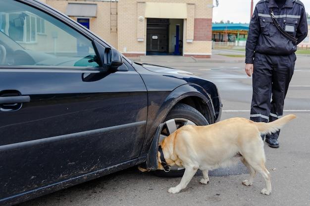 Chien des douanes du labrador retriever cherchant des objets dont le transfert par la frontière est interdit Photo Premium