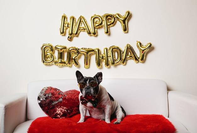 Chien Drôle Célébrant Sa Fête D'anniversaire Sur Le Canapé à La Maison Photo Premium