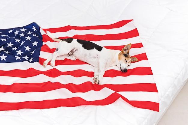 Chien endormi mignon se trouve sur les états-unis états-unis de drapeau américain Photo Premium
