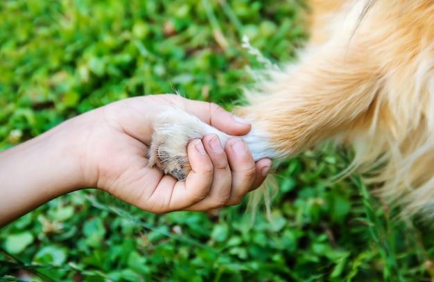 Le chien est l'ami de l'homme. donne une patte à l'enfant. Photo Premium