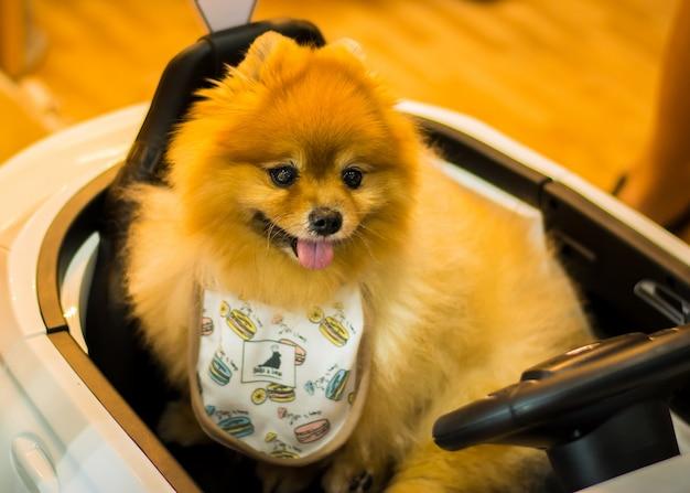 Chien à l'exposition de chien Photo Premium