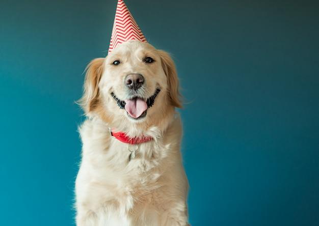 Chien Golden Retriever En Bonnet D'anniversaire Célébrer L'anniversaire En Studio Photo Premium