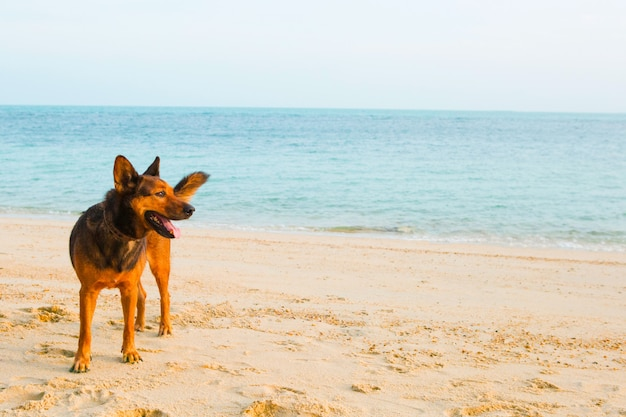 Un chien heureux se détendre sur la plage Photo Premium
