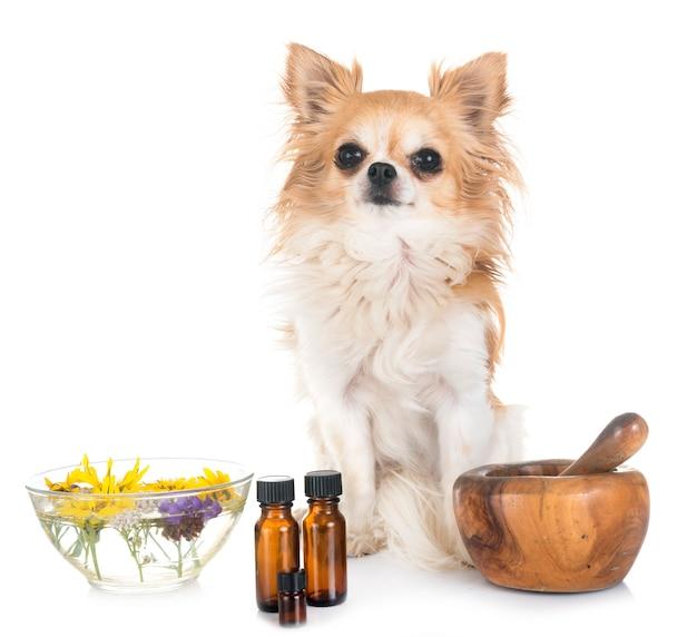 Chien et huiles essentielles Photo Premium