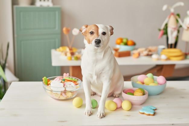Chien jack russell terrier à pâques assis sur la table dans la cuisine avec des œufs et du pain d'épice Photo Premium