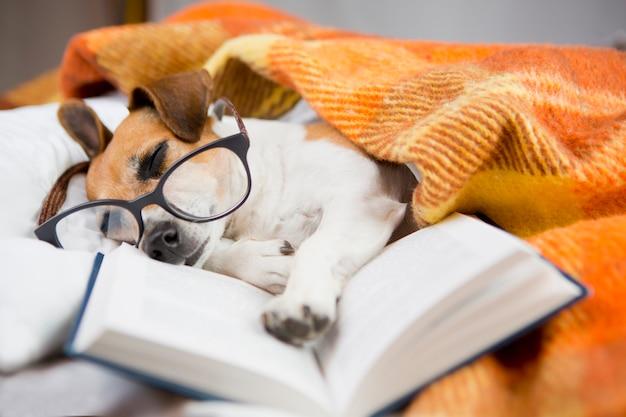 Chien avec lecture avec lunettes endormi dans un lit confortable avec un livre Photo Premium