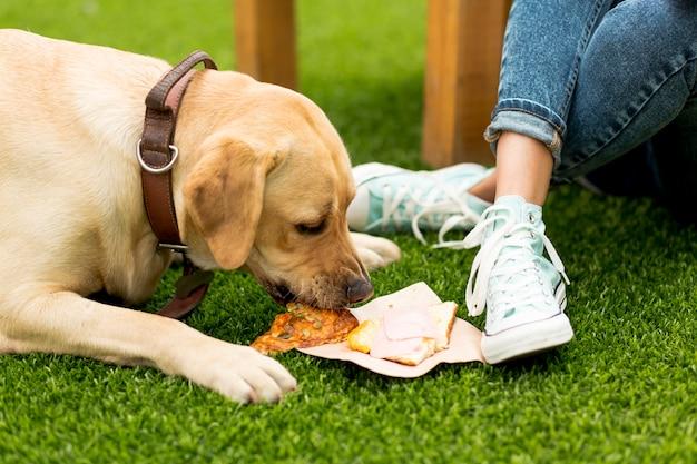 Chien mangeant un sandwich dans le parc Photo gratuit
