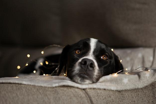 Chien mignon assis avec des lumières de noël Photo gratuit