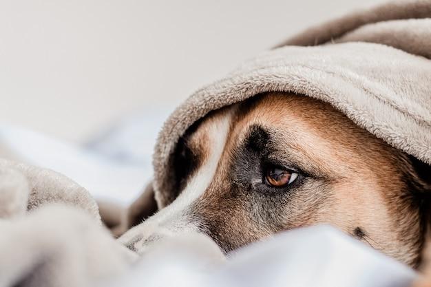 Chien mignon sur la couche de lit sous un blanket Photo Premium