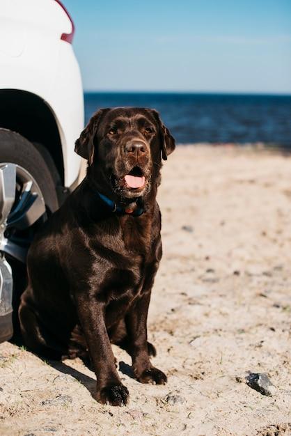 Chien noir s'amusant à la plage Photo gratuit