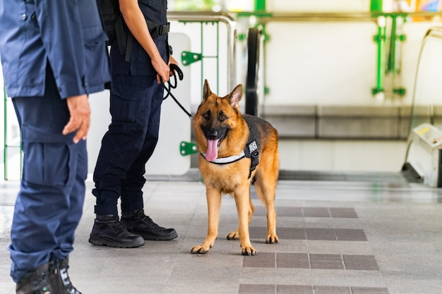 Chien de police debout dans la gare Photo Premium