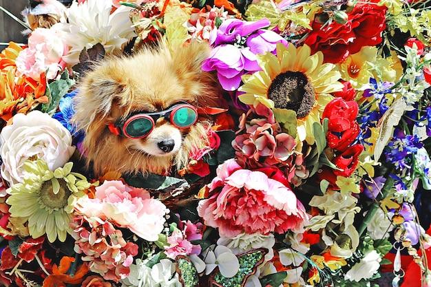 Chien Portant Des Lunettes Entourées De Fleurs Photo gratuit