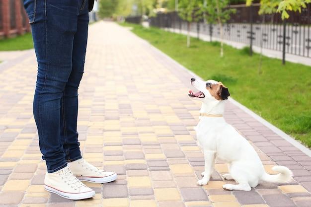 Chien et propriétaire jack russell terrier en prévision d'une promenade dans le parc, dans la rue, patient et obéissant. chiens d'éducation et de dressage. amitié homme et chien ensemble pour les vacances d'été. Photo Premium