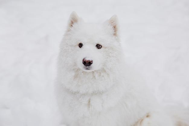Chien de race blanche sur la neige dans une forêt. animaux drôles Photo Premium