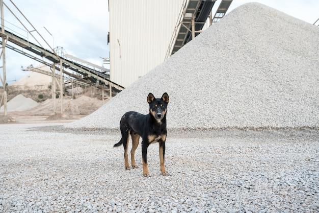 Un chien d'usine en béton Photo Premium