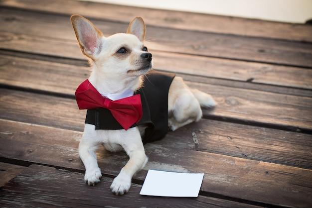 Un chien vêtu à la mode. Photo Premium