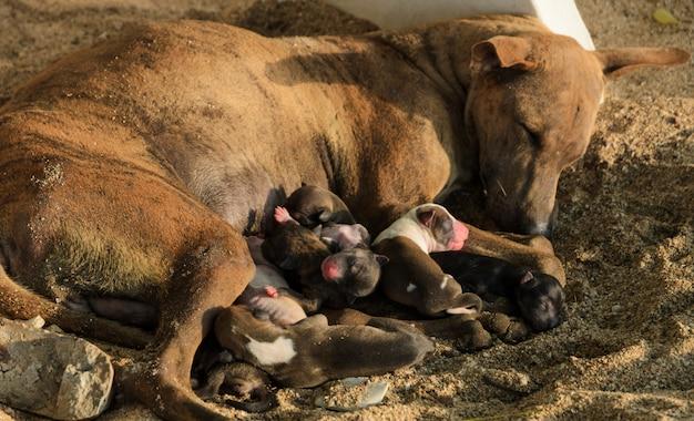 Chiens chiens errants allaités Photo Premium