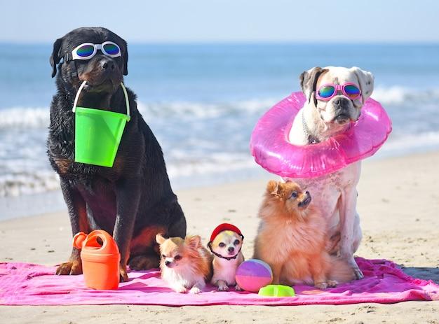Chiens sur la plage Photo Premium