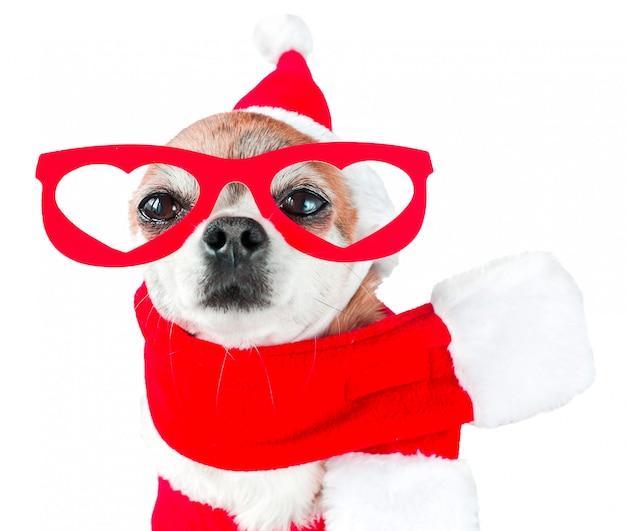 Chihuahua de chien mignon en costume de père noël avec des lunettes rouges sur les yeux blanc isolé. Photo Premium