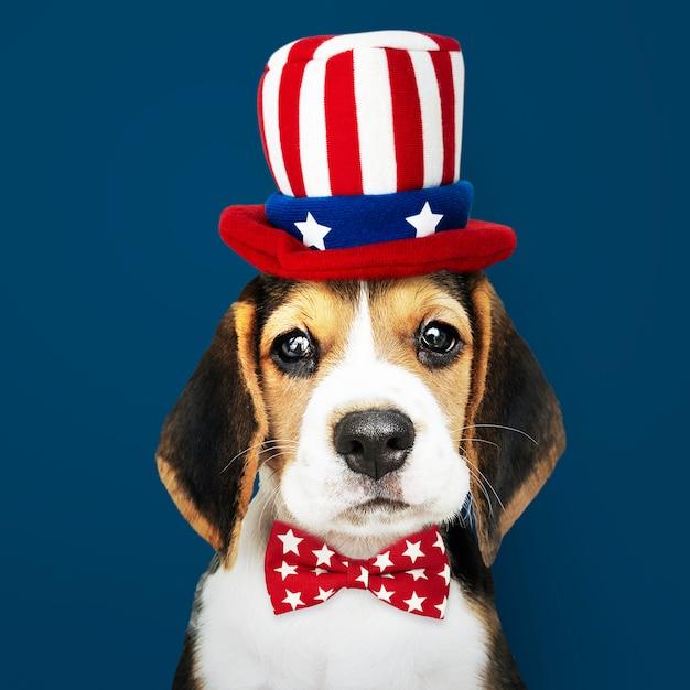 Chiot beagle américain Photo Premium