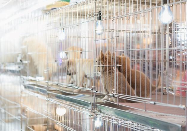 Chiot dans une cage pour la vente sur le marché des animaux de compagnie Photo Premium