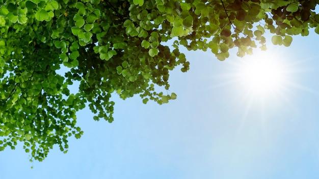 Chongkho ou arbre d'orchidée pourpre dans le fond de feuilles vertes de jardin Photo Premium