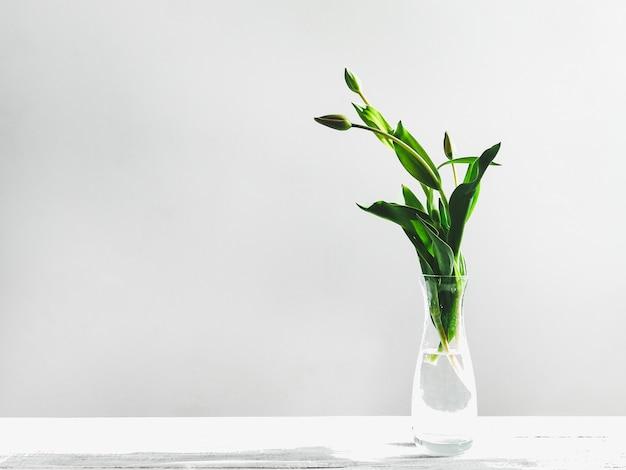 Choux de jeunes tulipes Photo Premium